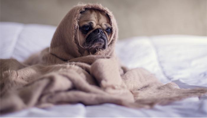5 tips para cuidar a tus perros en invierno