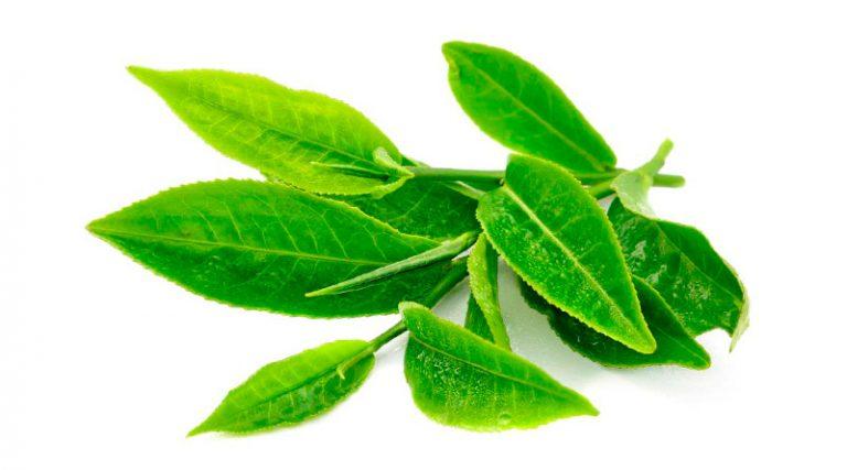 Té verde y guaraná: el secreto de muchos deportistas