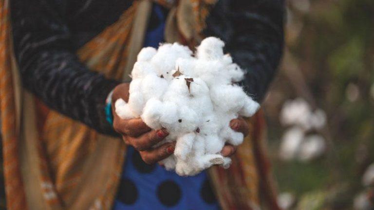 ¿Cómo puede la ropa cambiar la industria agrícola? El caso Patagonia